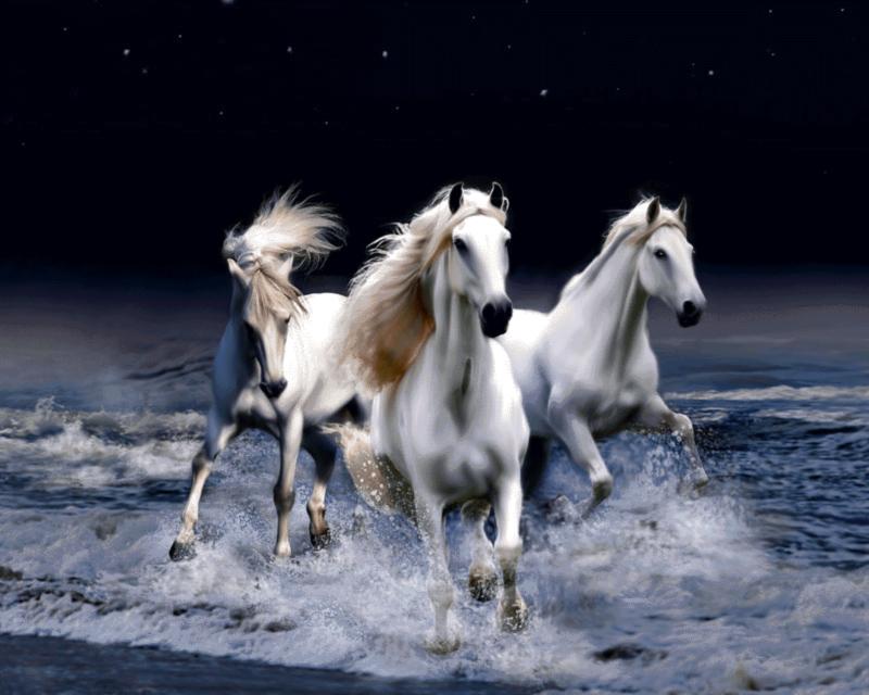 لوازم آماده بافت تابلو فرش طرح حیوانات - اسب های وحشی