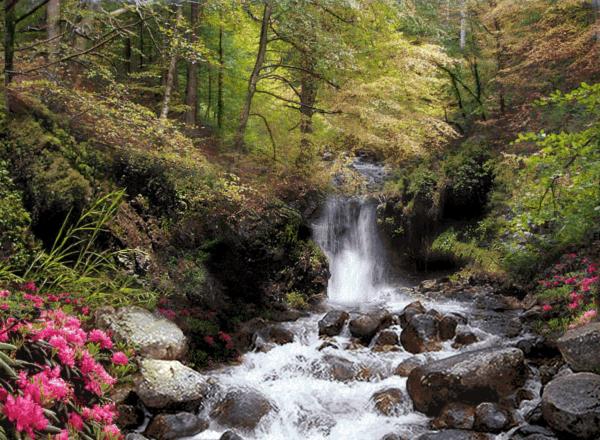 رودخانه جنگلي -كد F97