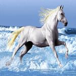 نخ و نقشه اماده اسب وحشی