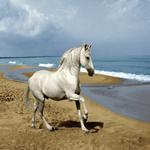 نخ و نقشه اسب