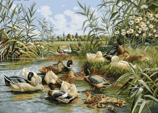 منظره اردک ها - کد F1007
