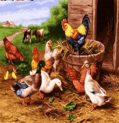 مزرعه مرغ و خروس -کد G - 89