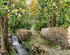 کوچه باغ پاییزی با برکه  -کدF21