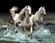 سه اسب - g701