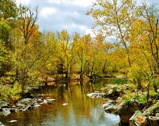 جنگل رودخانه دار - کد  F3