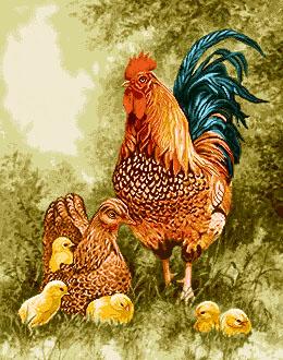 نخ و نقشه , دارچله كشي آماده , نخ و نقشه مرغ و خروس