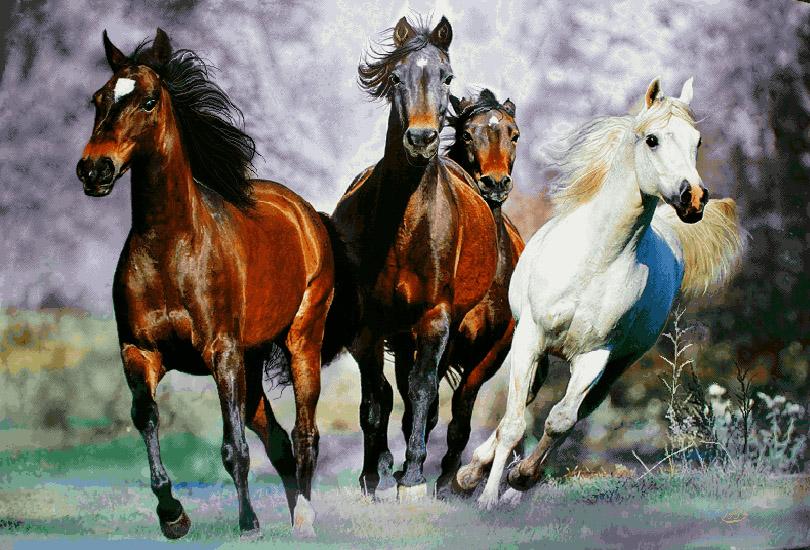 فرار اسب ها - G20