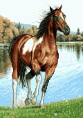 آموزشی اسب - كد G50